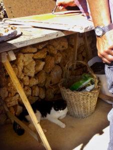 Malen mit Katze unterm Maltisch auf Ses Tanques.