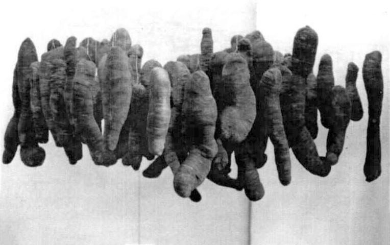 Hängende Kokons, Fundstücke mit staubedeckten Mullbinden überzogen